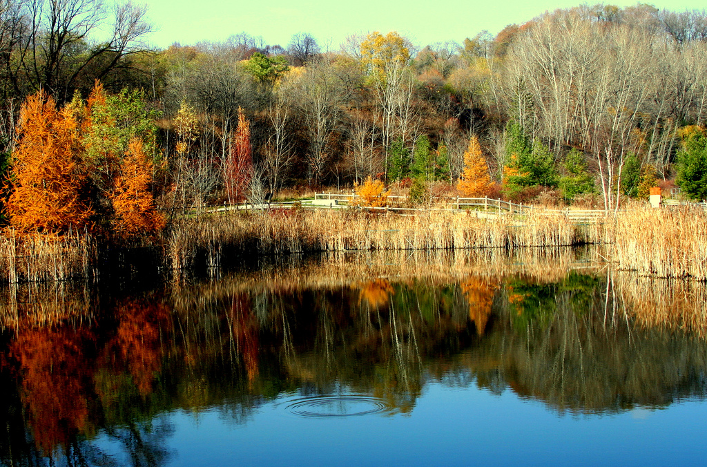 Fall foliage in Don River Valley Park (Bahman, Flickr)