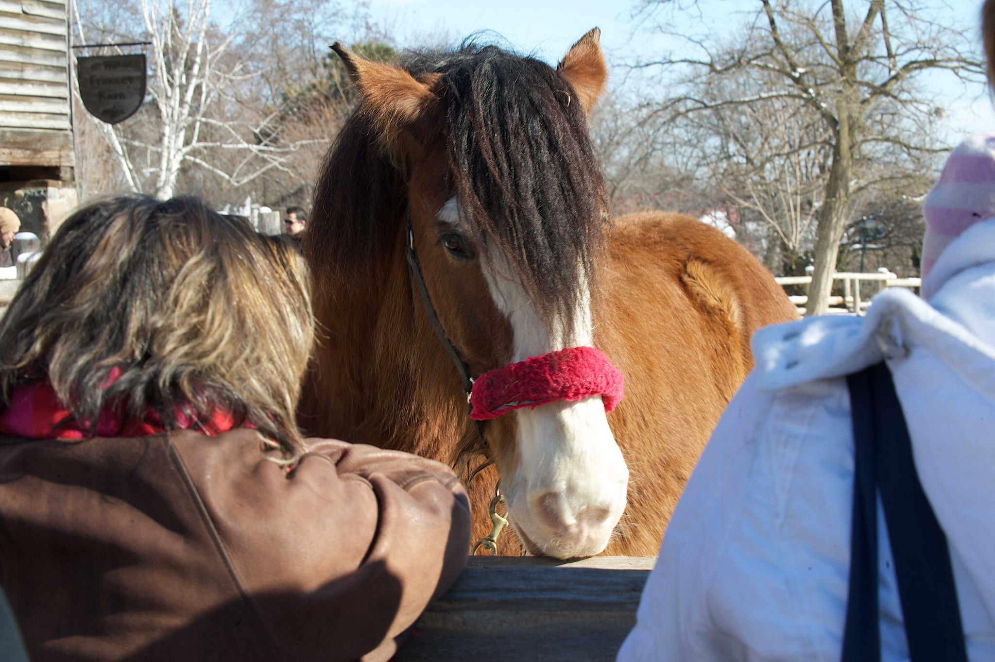 Image of horse and people at Riverdale Farm.